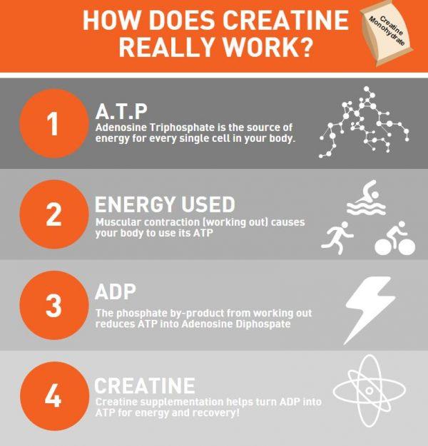 Creatine-Infographic1