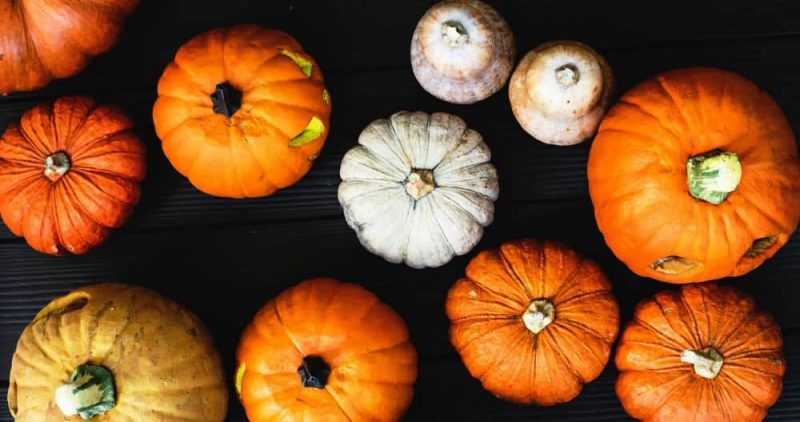Phenylalanine for Stress from pumkins