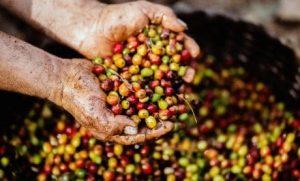 Green Coffee Benefits Thumbnail_1
