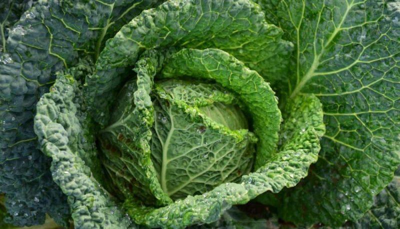 Kale for Benefits of Potassium