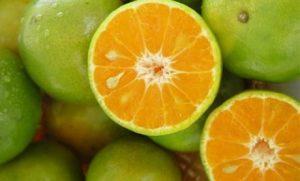 Bitter Orange Benefits Thumbnail