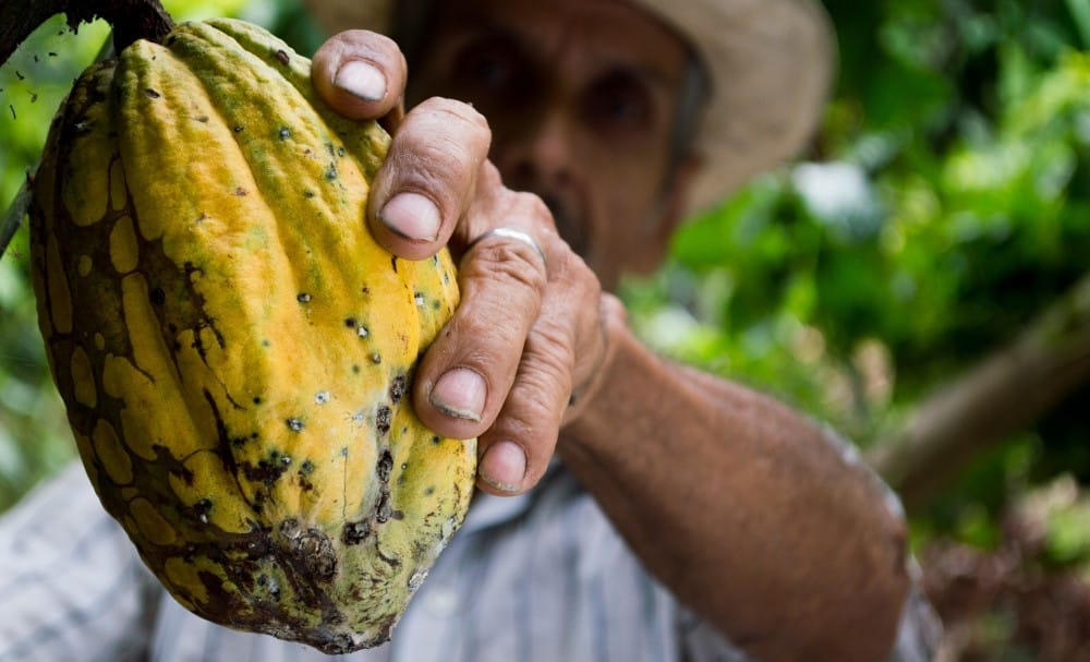 Healthy Fresh Cacao