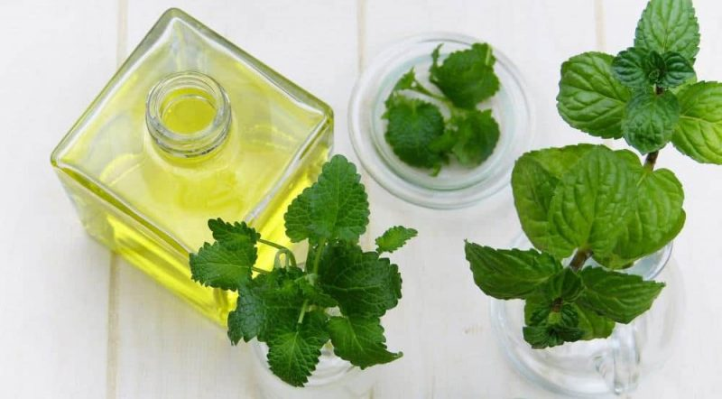 Oli Lemon Balm for Anxiety