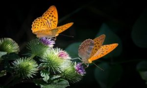 Yellow butterflies on green plant