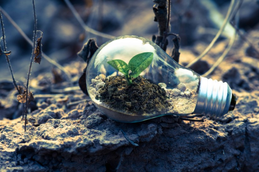 plant growing in a light bulb in the forest deomonstrating Growth Mindset