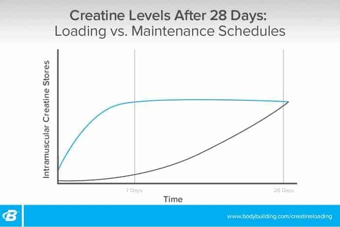 Graph contrasting creatine load vs. low level consumption