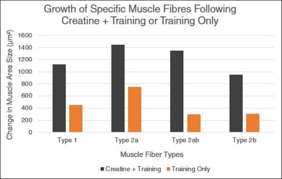 Graph contrasting results with and without creatine